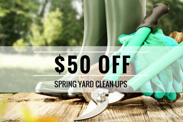 spring yard cleanup special