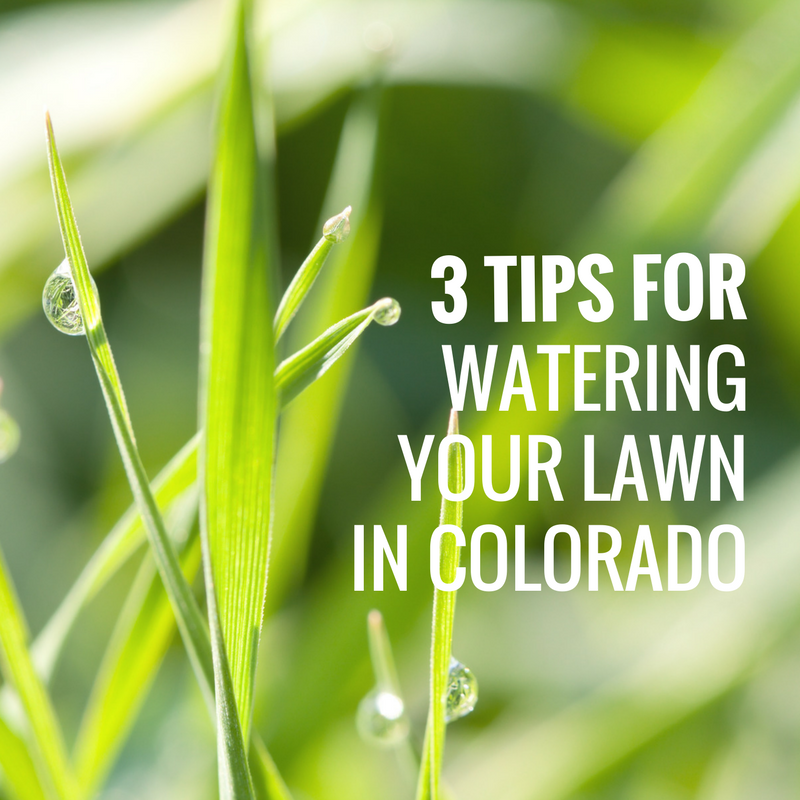 3 TIPS FOR WATERING YOUR LAWN IN COLORADO