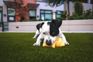 7 Times to use artificial turf vs grass in your lawn