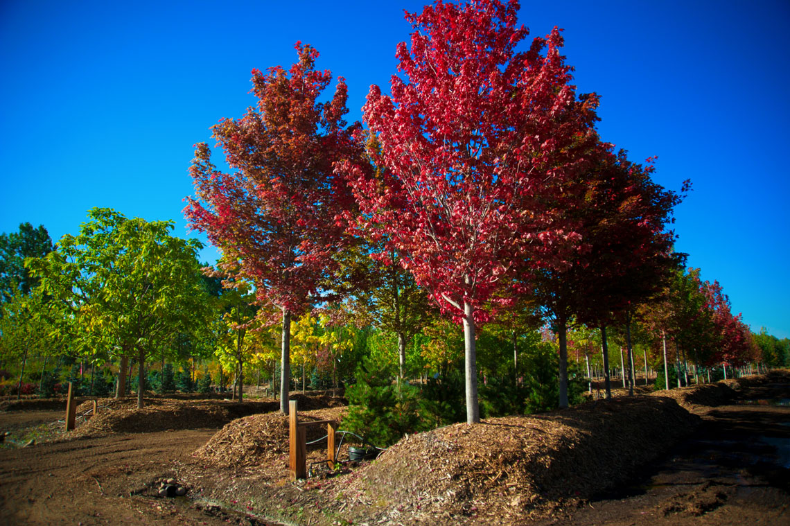 At Low Maintenance Trees All Terrain Landscaping