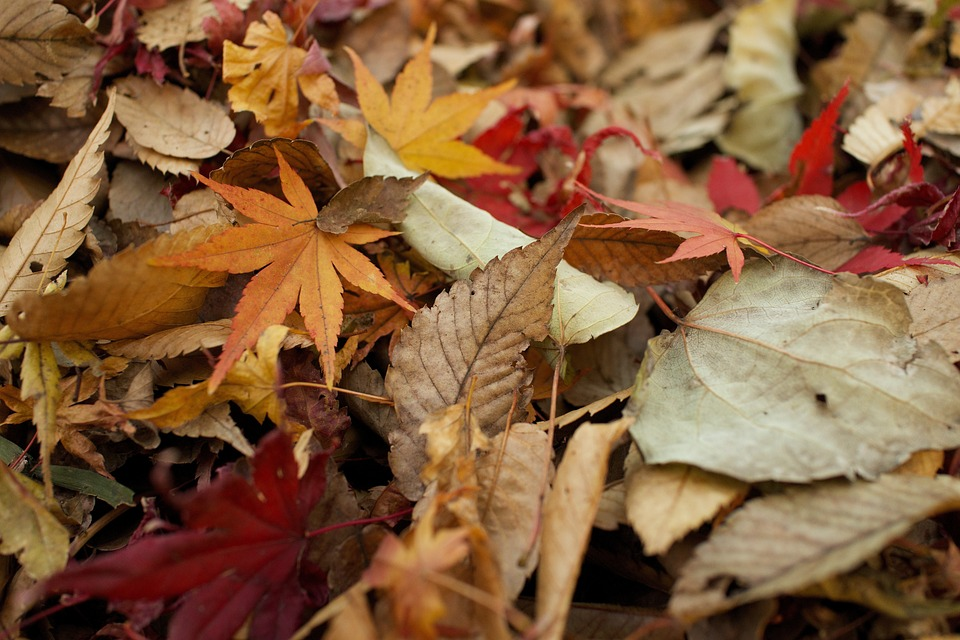 5 Things to Do with the Leaves You Just Raked