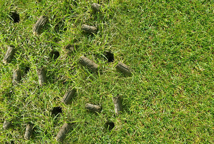 Lawn Aeration: The what, why, and when
