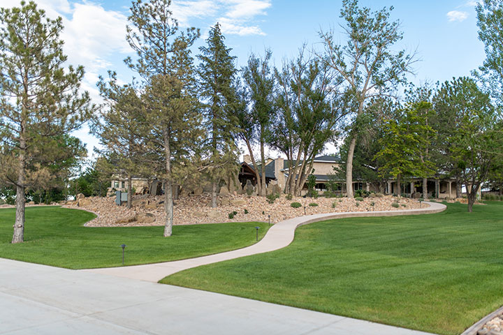 Privacy Trees In Northern Colorado